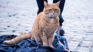 Un chat pour la vie
